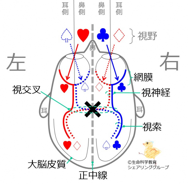 Images of 半盲 - JapaneseClass...